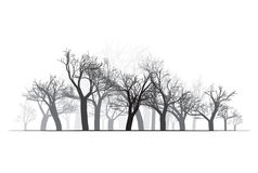 Forest Background large - illustration de vecteur Photo libre de droits