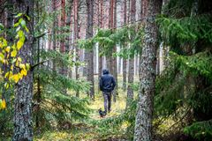 Man walk in forest with his dog Royalty Free Stock Photos