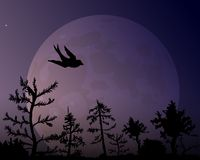 The forest on the background of the moon and silhouette of bird. Dark violet night sky vector illustration Stock Image