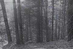 Forest Background nevoento fotos de stock royalty free