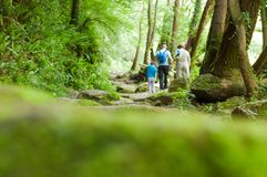 Forest background with people Walking through the forest, with a. Selective focus. Stones covered with moss. Life style royalty free stock photo