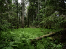 Forest background Stock Image