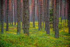 Forest background of tree trunks stock images