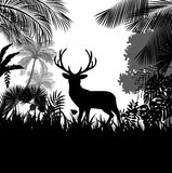 Forest background with wild deer of trees Stock Image