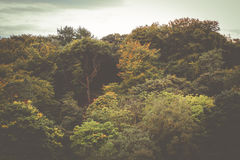 Forest Background Stock Photography