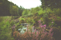 Forest Background Royalty Free Stock Photo
