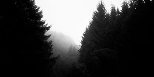 Forest Background Royalty Free Stock Photos
