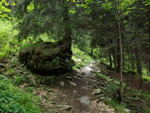 Forest in Balea lac districkt Royalty Free Stock Photo