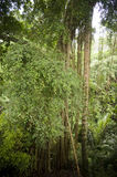 Forest in bali Stock Image