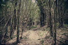 Forest bamboo Stock Photo