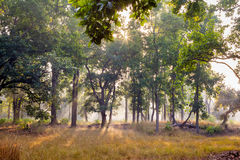Forest at Bandhavgarh National Park, India Royalty Free Stock Photos