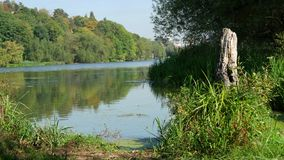 Forest On The Bank Of The River stock footage