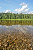 Forest on the banks of the taiga river. Royalty Free Stock Images