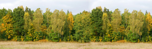 Forest Banner Background Lizenzfreies Stockbild