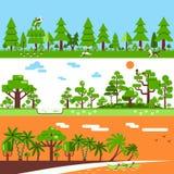 Forest Banners tropical de hojas caducas conífero Foto de archivo libre de regalías