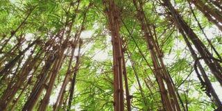 Forest Bathing imagen de archivo libre de regalías