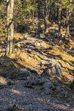 Forest Bavaria Alps Royalty Free Stock Photo
