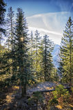 Forest Bavaria Alps Royalty Free Stock Photography