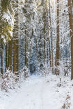 Forest in Bavaria Royalty Free Stock Image