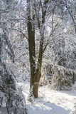Forest in Bavaria Royalty Free Stock Photo
