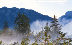 Forest in Bavarian Alps in fog Royalty Free Stock Images