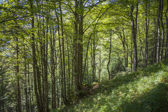 Forest in the bavarian mountains Royalty Free Stock Images
