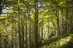 Forest in the bavarian mountains Royalty Free Stock Photography