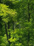 Forest Bayern Stock Images
