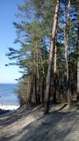 Forest, beach and sea. The Baltic sea and wonderful sky. Beatiful beach white sand. Forest with birch trees. Blue. Contrast royalty free stock photos