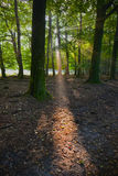 Forest beam light Royalty Free Stock Photos