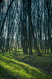 Forest. Beautiful dawn is in the green forest Stock Photo