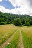 Forest and beautiful hillside scenary Stock Image