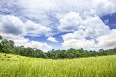 Forest with beautiful sky. Forest with beautiful sky and grass field royalty free stock photography