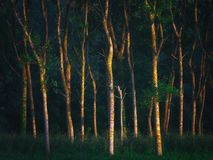 Forest with beautiful sunlight stock photography