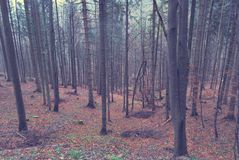 Beautiful trees during fall in the forest royalty free stock image