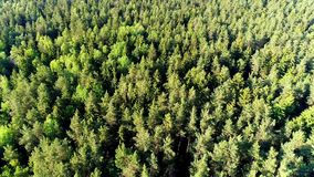 Aerial survey, flying over the trees. The forest, beautiful trees, the view, the charming green of the pines