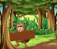 A forest with a beaver holding an empty board under the tree Royalty Free Stock Photography