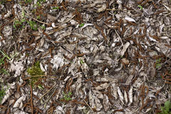Forest bedding background on a sunny day. Stock Image