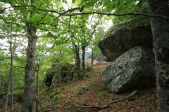 Forest of beech tree in Pyrenees. Forest of beech tree and granite bloc in Pyrenees, France Royalty Free Stock Photos