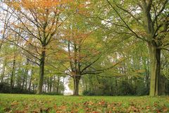 Forest with beeches in the park. Forest with beeches in the park on a Sunny day in the beautiful autumn Stock Images