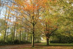 Forest with beeches in the park. Forest with beeches in the park on a Sunny day in the beautiful autumn Stock Photos