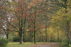 Forest with beeches in the park. Forest with beeches in the park on a Sunny day in the beautiful autumn Stock Photography