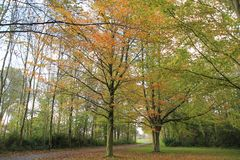 Forest with beeches in the park. Forest with beeches in the park on a Sunny day in the beautiful autumn Royalty Free Stock Image