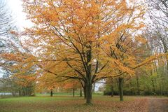 Forest with beeches in the park. Forest with beeches in the park on a Sunny day in the beautiful autumn Stock Photo