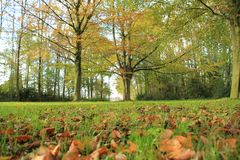 Forest with beeches in the park. Forest with beeches in the park on a Sunny day in the beautiful autumn Stock Image