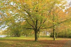 Forest with beeches in the park. Forest with beeches in the park on a Sunny day in the beautiful autumn Royalty Free Stock Photo