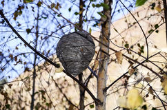 Forest beehive on the tree. Grey forest beehive on the tree in europe Royalty Free Stock Photo
