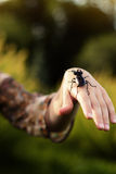 Forest beetle on the human hand Royalty Free Stock Photography