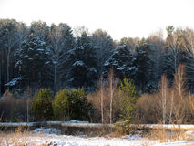 The forest in the beginning of winter. In Russia Royalty Free Stock Photography