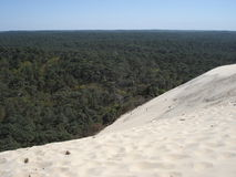 Forest behind the slope of the dune of Pilat. 2006 Stock Image